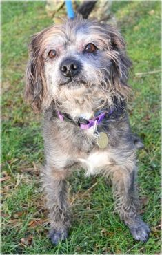 Scotty is a sweet and silly Terrier mix of around 9 years old who came to us from a local town shelter. Scotty is seeking a loving and active furever family who likes to keep busy just like he does.