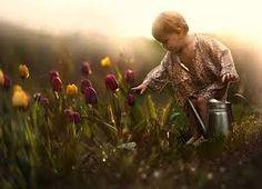 SABEDORIA E SAÚDE: Sementes e semeadura . O que temos nós plantado n...