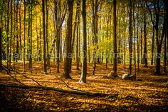 Autumn Woods Fine Art Photography Autumn by PatrickRabbatPhotos