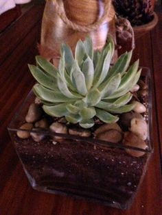 Succulent wedding decor. TheSucculentSource