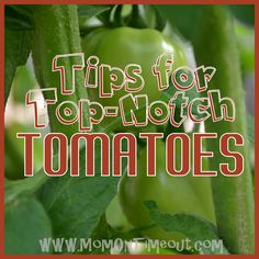 Mom On Timeout: Tips for Top-Notch Tomatoes