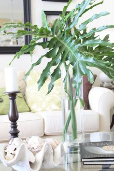 West Indies Elements: Large Palm in a vase, Seashells. West Indies Decor, West Indies Style, British West Indies, Tropical Style, Tropical Decor, Coastal Style, Coastal Decor, Tropical Plants, Coastal Living Rooms