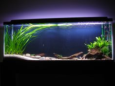 minimal plants, different levels of substrate, negative space. Very sleek look.