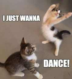 NSP - Danny Avidan I just want....I just want DANCE!!! Jesus the Christ I'm dancing! Now you believe in God!!! Lol