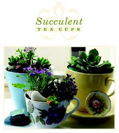 DIY: Succulent Tea Cups
