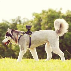 Fancy - Sony Action #Cam #Dog Mount
