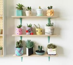 succulents shelf display