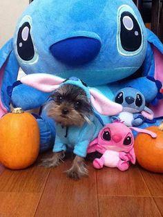 Dog Halloween Costume Contest: Lilo & Stitch