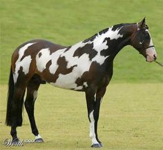 "His pattern spells ""horse""."