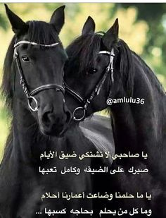 Pin By خليفه On كلمات Arabic Horse Horse Pictures Arabic Words