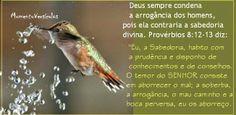 Momento Versículos : Deus condena a arrogância (Prov 8.12-13)
