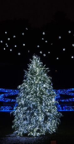 The Philadelphia Story/karen cox...A starry Christmas sky at Longwood Gardens #longwoodgardens  #kennettsquare