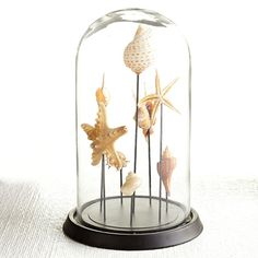 """Wisteria - Accessories - Decorative Objects - Curiosity of Shells - 14"""" high"""