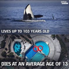 Stop whale abuse<<< I don't know if I would say abuse, but yes I agree that whales in captivity and trained to put on a show should be stopped. They aren't meant to be in such a small enclosure