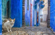 The World's Best Photos of cat and chefchaouen World Best Photos, Cool Photos, City, Painting, Travel, Animals, Wall, World, Viajes
