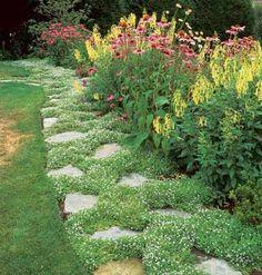 Garden path, blue star creeper groundcover http://www.greenerearthnursery.com/blue-star-creeper.html#.UXb8COj8vJc $6.99