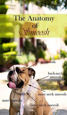 Baggy Bulldogs soooo cute!! smoosh!!
