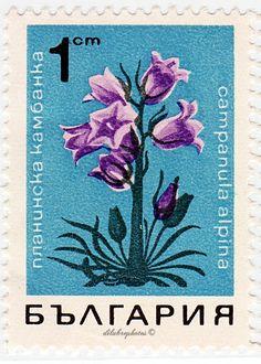 Bulgaria.  FLOWERS.   BELL FLOWER. Scott 1664.  A699, Issued 1968 Apr 25,  1. /ldb.