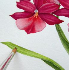 How to paint botanicals in watercolour – PART THREE
