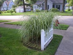 I love grasses.  This one is just the right size for the corner of the front yard..