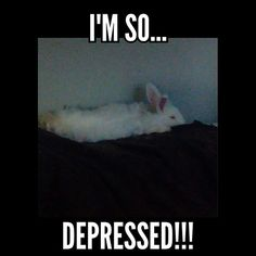 One bunny. So depressed. All alone.