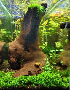 I would love to find a cool piece of wood for when I do my tank.
