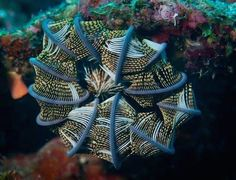 FEATHER STAR - These flowing and wispy creatures can be found in the Indian Ocean and the waters up to Japan. Although they spend most of their time living on rocks in shallow water, their fringes can help them to swim. (1005×768)