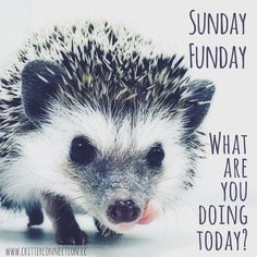 Sunday Funday, Hedgehog, Connection, Jokes, Lol, Humor, Funny, Cute, Animals
