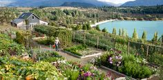 my wanaka garden on a spring day – heaven!