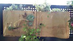 Mis jardines verticales. Refractario 50 x 40 cm.