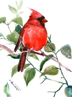 Red Cardinal Bird Artwork, Original one of a kind watercolor painting, cardinal birds, northern cardinal, birds of USA by ORIGINALONLY on Etsy Watercolor Bird, Watercolor Paintings, Bird Artwork, Cardinal Birds, All Nature, Amazing Drawings, Pastel Drawing, Bird Drawings, Pictures To Paint