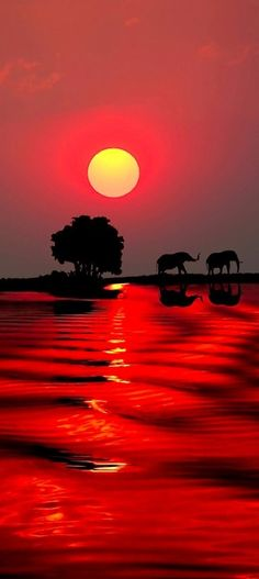 Sunset in Botswana • photo: Michael Sheridan on Redbubble