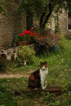 Living like a cat in France | Our holiday in France - by Terrence Weynschenk | Flickr