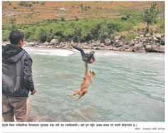 That's how you cross river with a lamb!
