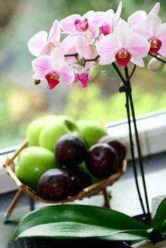 Orchideje, obsypané nádhernými květy, okouzlují stále více lidí. Pěstovat je lze i doma, jejich krása prozáří všední dny. Ať už vlastní jednu orchidej, nebo celou sbírku, čtenáři iReceptáře se o své květiny chtějí starat co nejlépe. Vybíráme dotazy, které při pěstování orchidejí často vyvstávají. Flora, Fruit, Plants