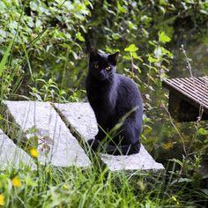 Black Beauty cats catsofinstagram schwarzekatze katzen garten blackbeauty gartenzauber katzenliebehellip