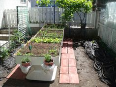 Above ground Garden from used fibreglass vegetable holders.