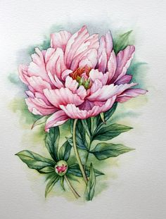 """Рисунок """"Розовый пион"""". Акварель, А4."""