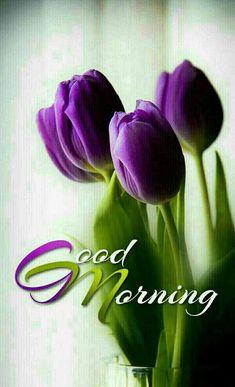good morning images \ good morning + good morning quotes + good morning quotes inspirational + good morning quotes for him + good morning beautiful + good morning wishes + good morning images + good morning greetings