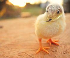 ALLPE Medio Ambiente Blog Medioambiente.org : 25 fantasiosos híbridos animales
