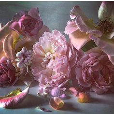 @mag.gieshep.herd  Composition of roses captured by artist Nick Night  @nick_knight with thanks #nickknight #artist #roses #flowers #petals #delicate #fragrance #beautiful #composition #arrangement #fragile #art #pink #aroma #lux #natural #nature #botany #botanical #garden #wedding #bouquet #stilllife #study #gorgeous