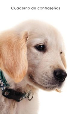 Password notebook: Small internet address and password logbook / journal / diary - Golden Retriever puppy cover (Dog lover's notebooks) Internet, Free Password, The Four Loves, Im Selfish, This Is My Story, Ebooks Pdf, Smile Because, Book Club Books, Historical Fiction