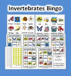 Invertebrate Bingo Game (Animals Without Backbones)