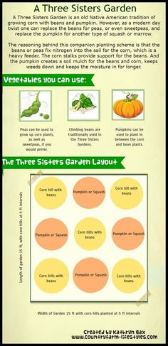 Three Sisters Garden Layout Infographics