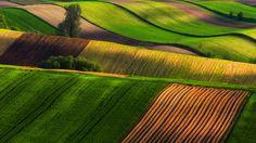 Poland fields