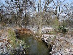 Winter wonderland, Walker Creek Park, North Richland Hills, Tx  IMG_0145