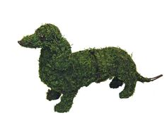 """Dachshund 13"""" Mossed www.braungroup.com #topiary #containergardening #flowers #sculptures #dogs #dog #gardening"""