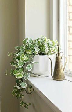 Hanging Plants, Potted Plants, Garden Plants, Plants On Window Sill, House Plants Decor, Plant Decor, Decoration Plante, Plant Aesthetic, Interior Plants