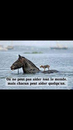 Cheval , chien