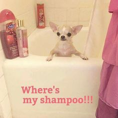 My sasha when ttying to escape from her bathtime!
